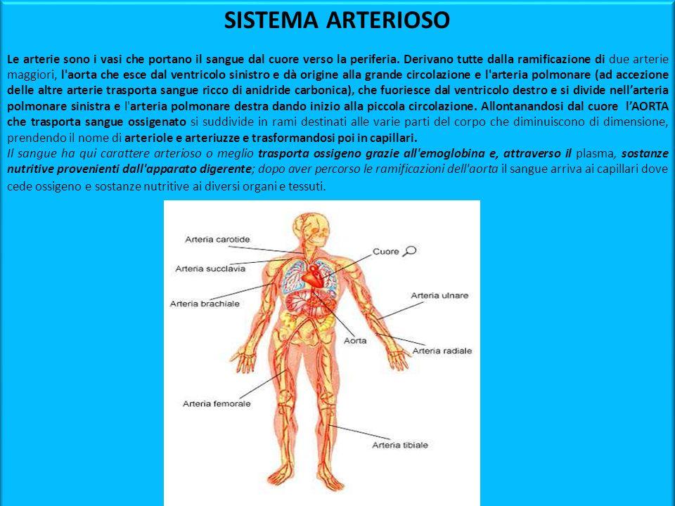 SISTEMA ARTERIOSO Le arterie sono i vasi che portano il sangue dal cuore verso la periferia. Derivano tutte dalla ramificazione di due arterie maggior