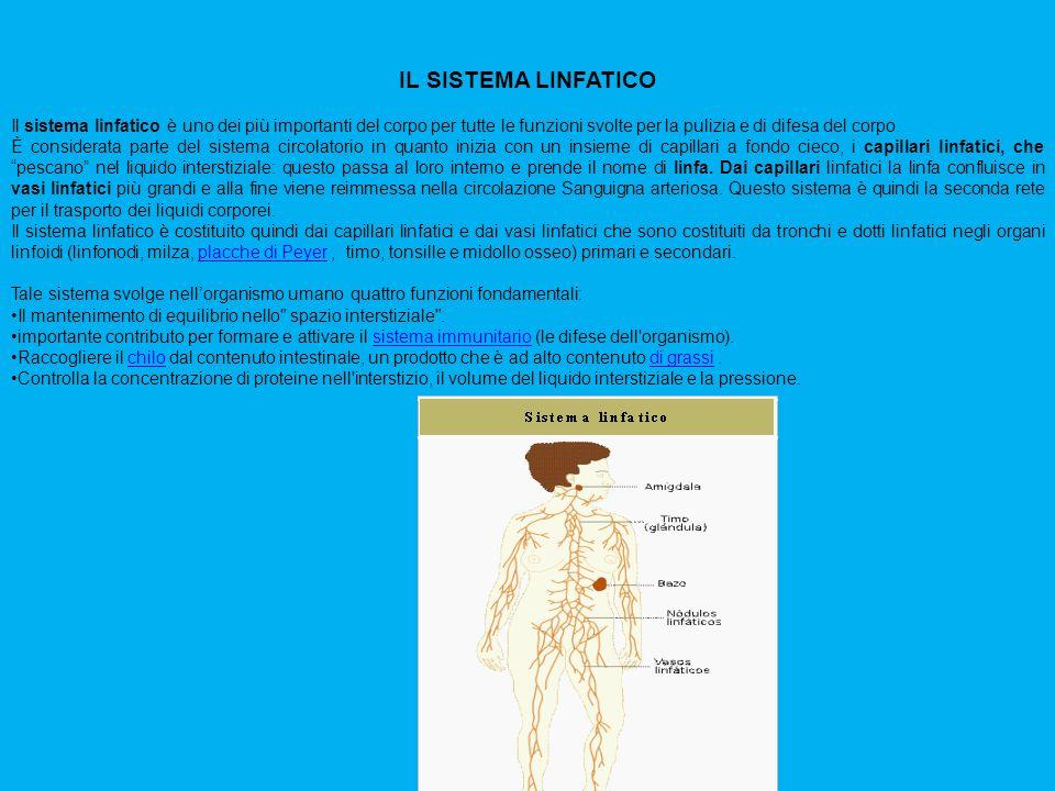 IL SISTEMA LINFATICO Il sistema linfatico è uno dei più importanti del corpo per tutte le funzioni svolte per la pulizia e di difesa del corpo. È cons