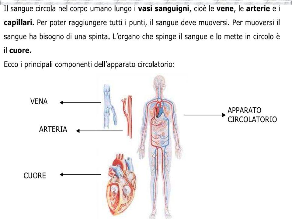 IL SISTEMA LINFATICO Il sistema linfatico è uno dei più importanti del corpo per tutte le funzioni svolte per la pulizia e di difesa del corpo.