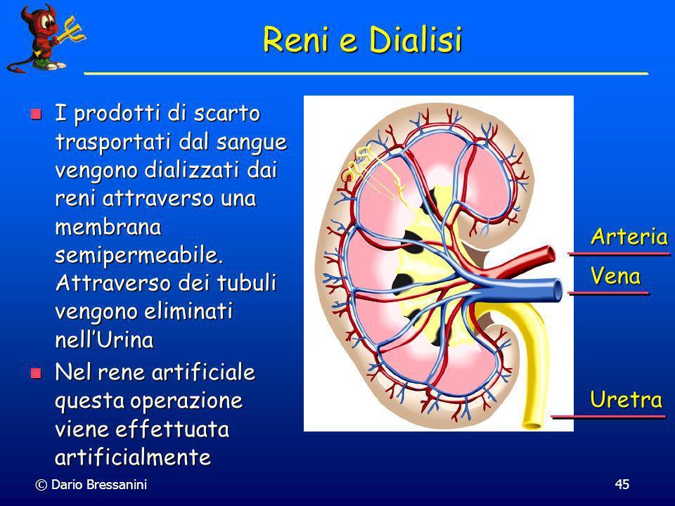 © Dario Bressanini45 Reni e Dialisi I prodotti di scarto trasportati dal sangue vengono dializzati dai reni attraverso una membrana semipermeabile. At