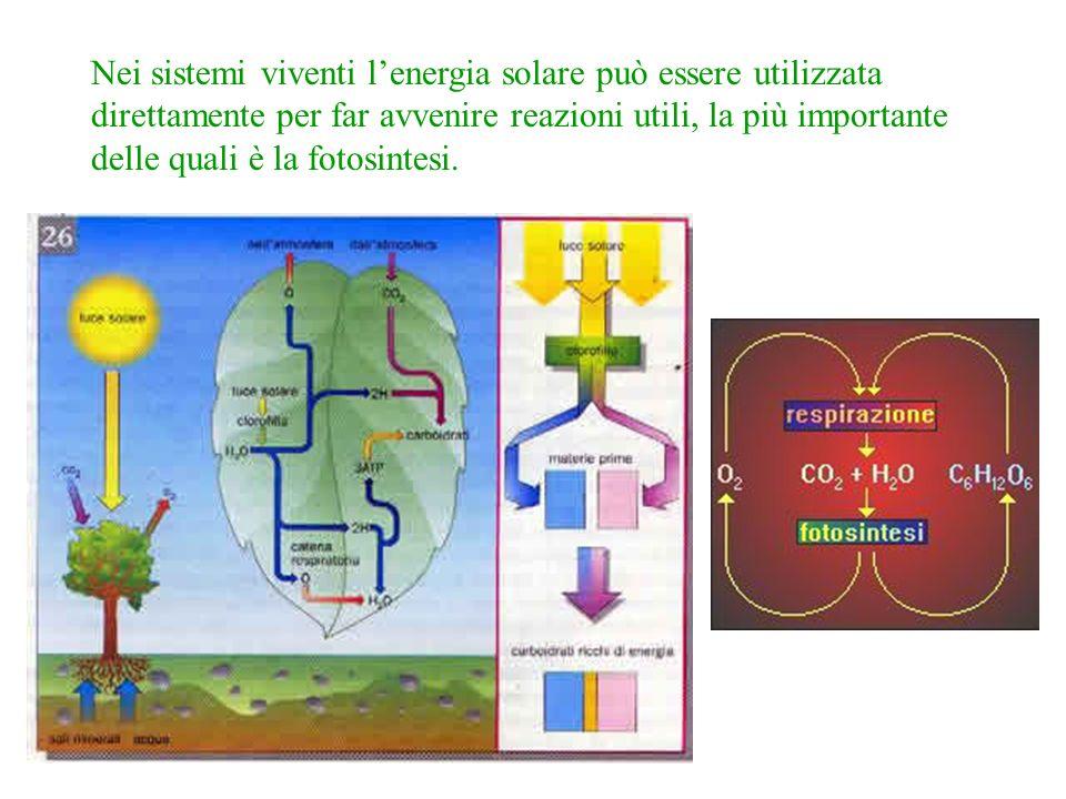 Nei sistemi viventi lenergia solare può essere utilizzata direttamente per far avvenire reazioni utili, la più importante delle quali è la fotosintesi.