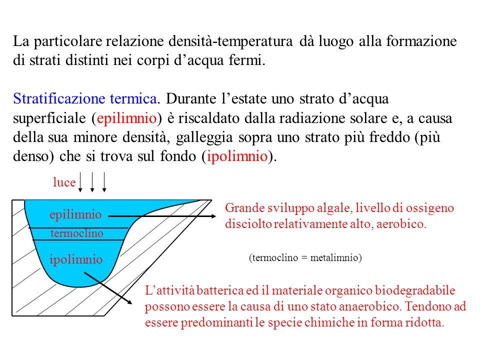 La particolare relazione densità-temperatura dà luogo alla formazione di strati distinti nei corpi dacqua fermi.