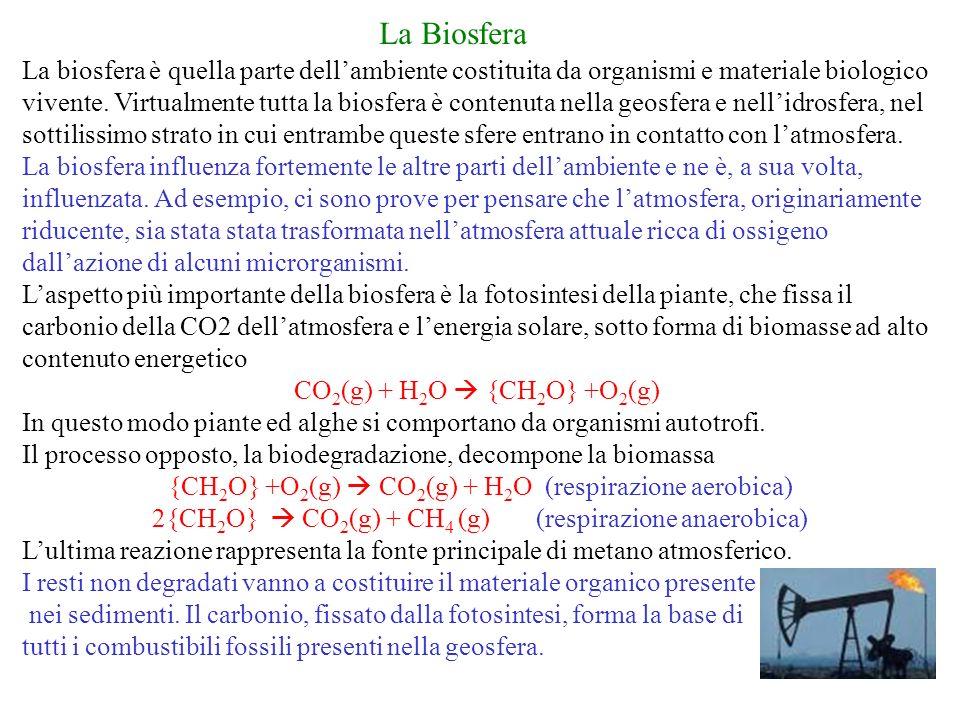 La Biosfera La biosfera è quella parte dellambiente costituita da organismi e materiale biologico vivente.
