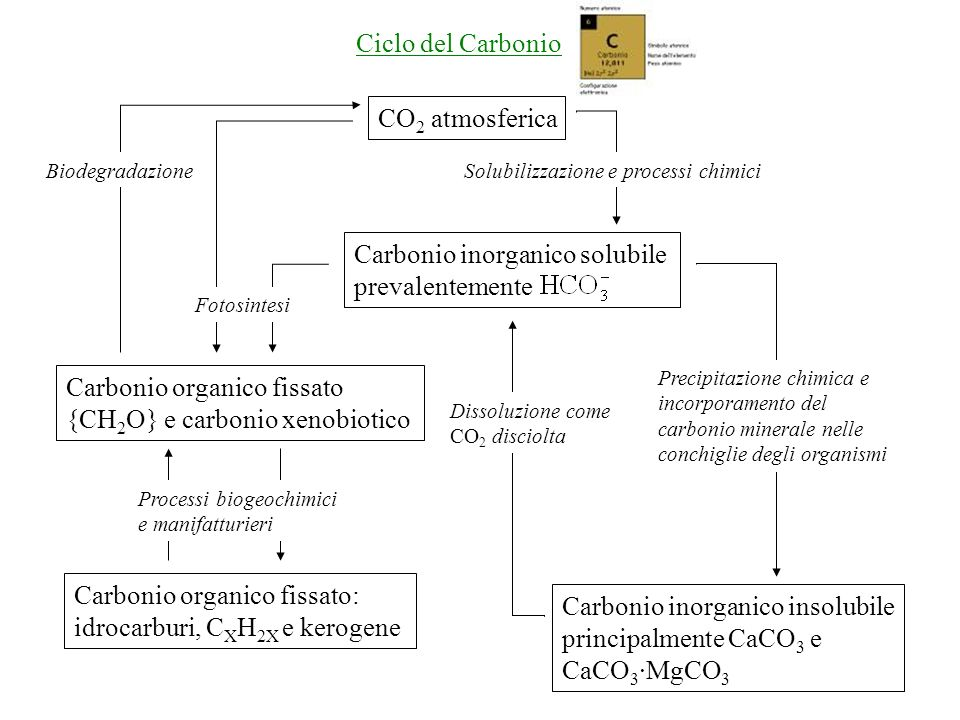 CO 2 atmosferica Carbonio inorganico solubile prevalentemente Carbonio organico fissato {CH 2 O} e carbonio xenobiotico Fotosintesi Biodegradazione Carbonio organico fissato: idrocarburi, C X H 2X e kerogene Carbonio inorganico insolubile principalmente CaCO 3 e CaCO 3 ·MgCO 3 Dissoluzione come CO 2 disciolta Precipitazione chimica e incorporamento del carbonio minerale nelle conchiglie degli organismi Solubilizzazione e processi chimici Processi biogeochimici e manifatturieri Ciclo del Carbonio