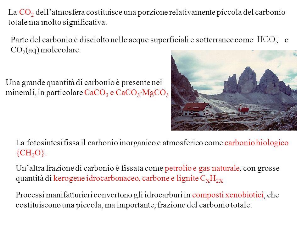 La CO 2 dellatmosfera costituisce una porzione relativamente piccola del carbonio totale ma molto significativa.