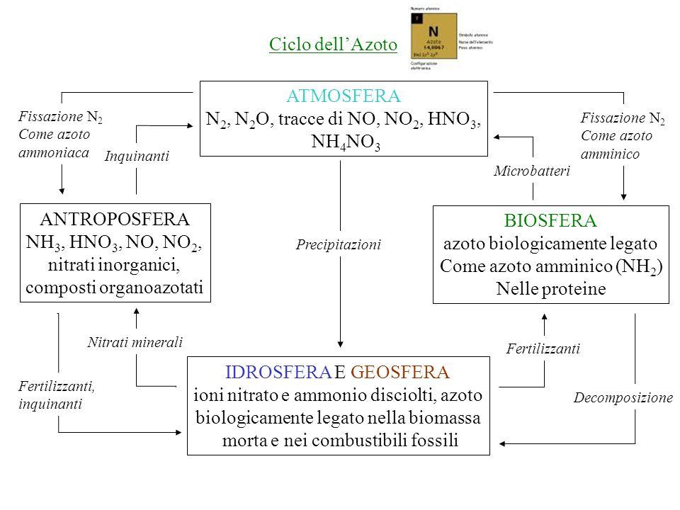 ATMOSFERA N 2, N 2 O, tracce di NO, NO 2, HNO 3, NH 4 NO 3 ANTROPOSFERA NH 3, HNO 3, NO, NO 2, nitrati inorganici, composti organoazotati BIOSFERA azoto biologicamente legato Come azoto amminico (NH 2 ) Nelle proteine IDROSFERA E GEOSFERA ioni nitrato e ammonio disciolti, azoto biologicamente legato nella biomassa morta e nei combustibili fossili Precipitazioni Fertilizzanti Decomposizione Fissazione N 2 Come azoto amminico Microbatteri Fissazione N 2 Come azoto ammoniaca Inquinanti Fertilizzanti, inquinanti Nitrati minerali Ciclo dellAzoto