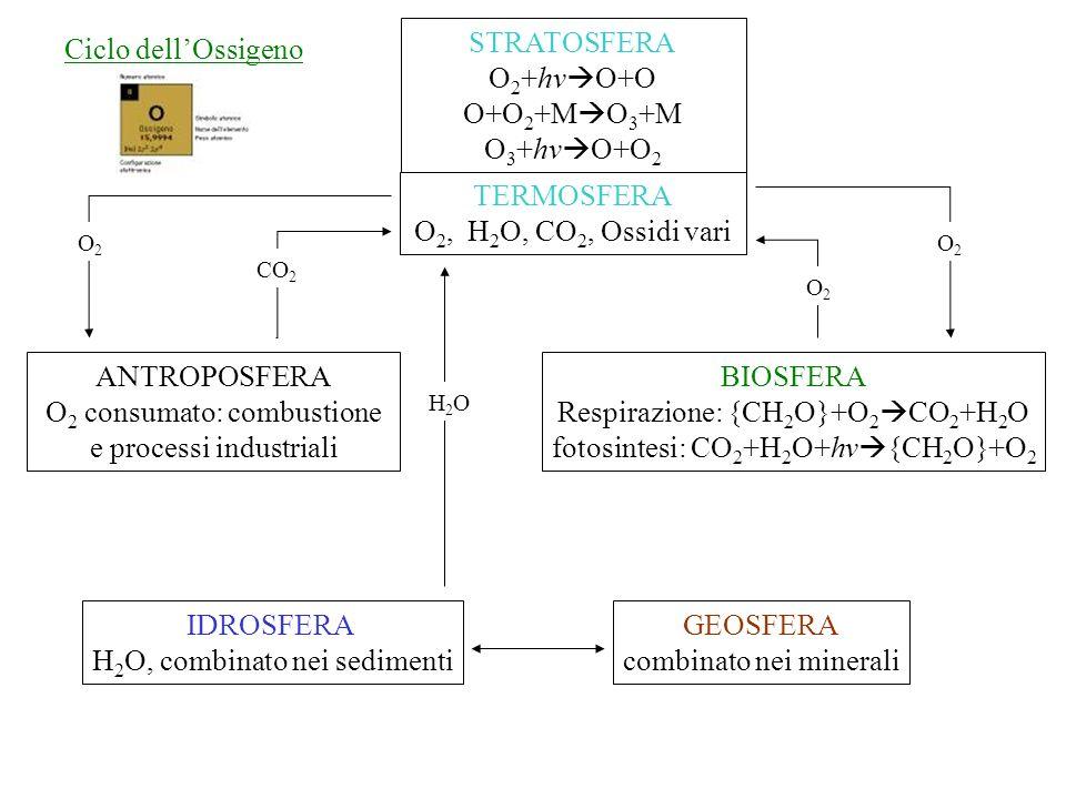 Ciclo dellOssigeno TERMOSFERA O 2, H 2 O, CO 2, Ossidi vari ANTROPOSFERA O 2 consumato: combustione e processi industriali BIOSFERA Respirazione: {CH 2 O}+O 2 CO 2 +H 2 O fotosintesi: CO 2 +H 2 O+hv {CH 2 O}+O 2 IDROSFERA H 2 O, combinato nei sedimenti STRATOSFERA O 2 +hv O+O O+O 2 +M O 3 +M O 3 +hv O+O 2 GEOSFERA combinato nei minerali CO 2 O2O2 O2O2 O2O2 H2OH2O