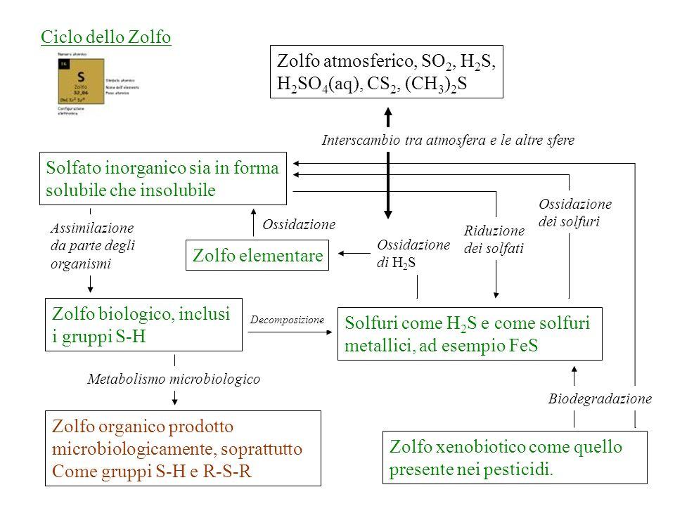 Zolfo atmosferico, SO 2, H 2 S, H 2 SO 4 (aq), CS 2, (CH 3 ) 2 S Zolfo biologico, inclusi i gruppi S-H Solfuri come H 2 S e come solfuri metallici, ad esempio FeS Zolfo organico prodotto microbiologicamente, soprattutto Come gruppi S-H e R-S-R Ciclo dello Zolfo Zolfo elementare Solfato inorganico sia in forma solubile che insolubile Zolfo xenobiotico come quello presente nei pesticidi.