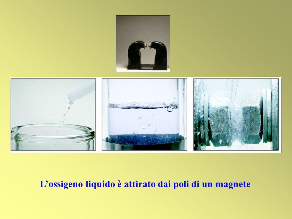 Lossigeno liquido è attirato dai poli di un magnete