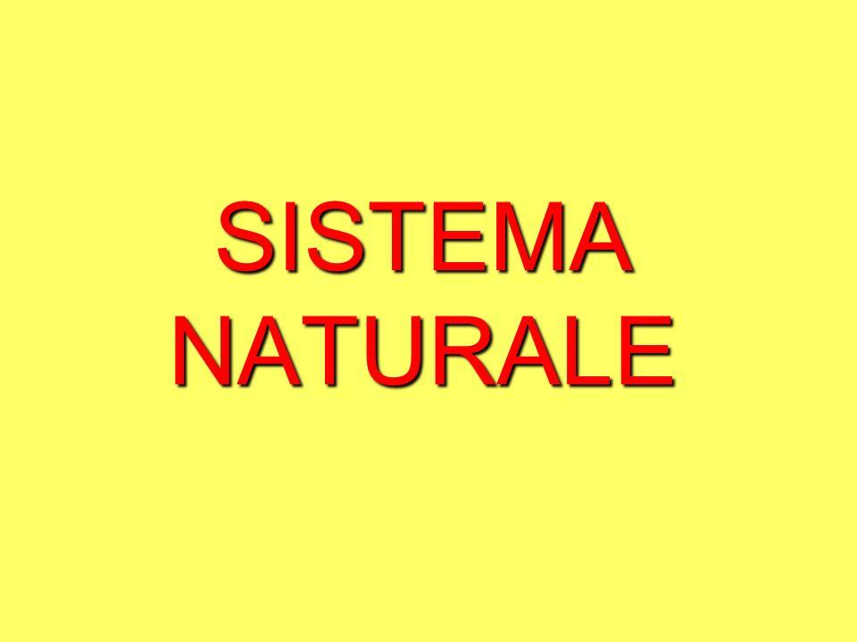 Principi di progettazione di un sistema naturale: 1.Tutto influenza tutto: individua le relazioni funzionali fra i vari elementi.