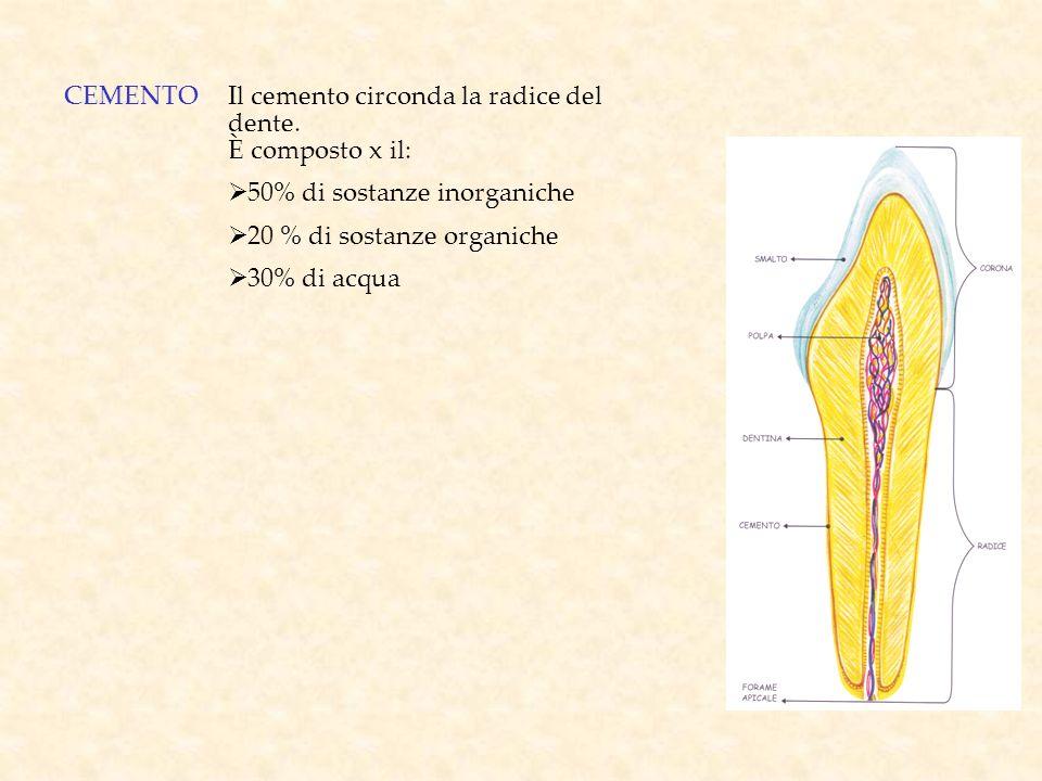 CEMENTOIl cemento circonda la radice del dente. È composto x il: 50% di sostanze inorganiche 20 % di sostanze organiche 30% di acqua