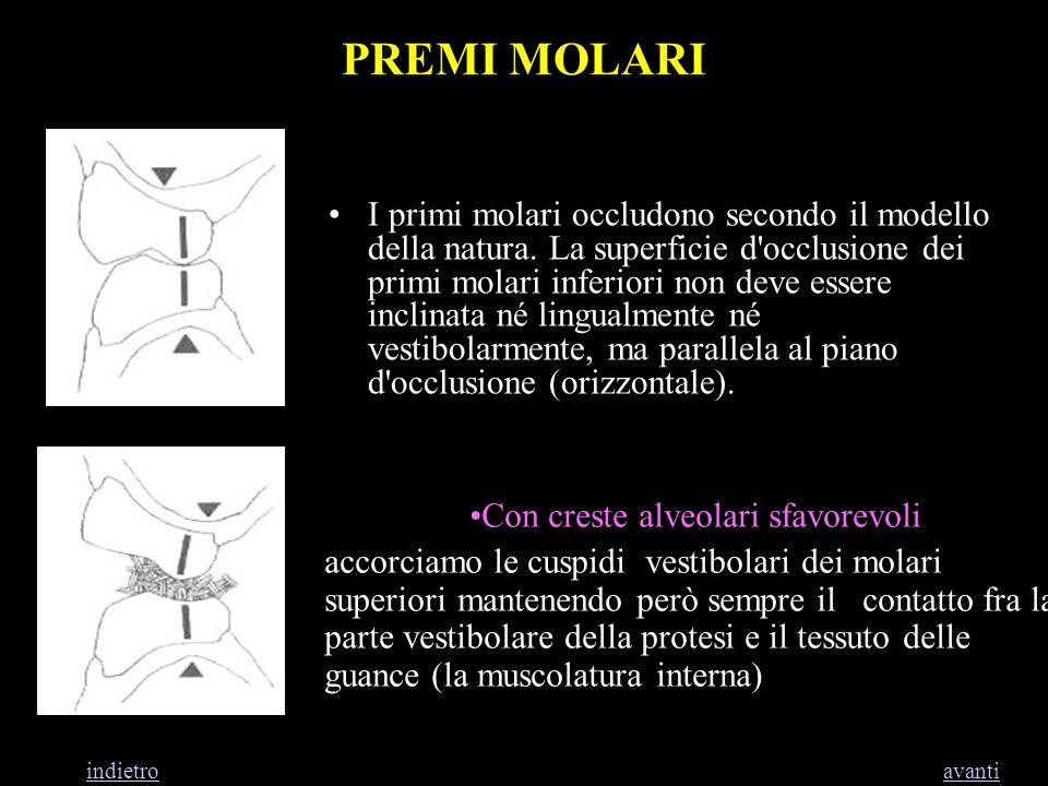 PREMI MOLARI I primi molari occludono secondo il modello della natura. La superficie d'occlusione dei primi molari inferiori non deve essere inclinata