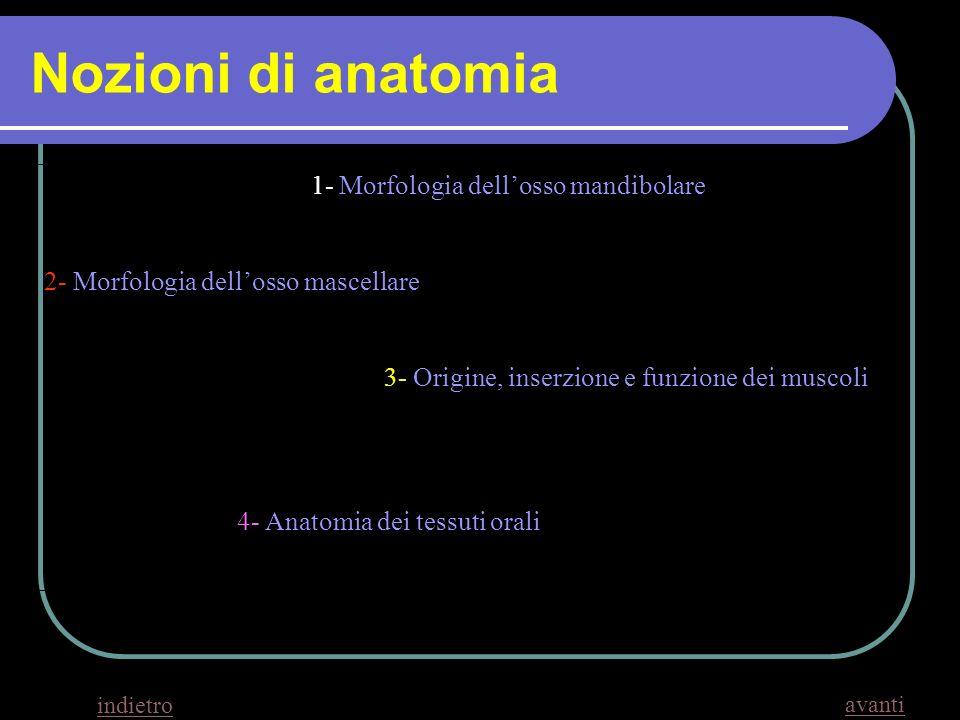 Nozioni di anatomia 1- Morfologia dellosso mandibolare 2- Morfologia dellosso mascellare 3- Origine, inserzione e funzione dei muscoli 4- Anatomia dei