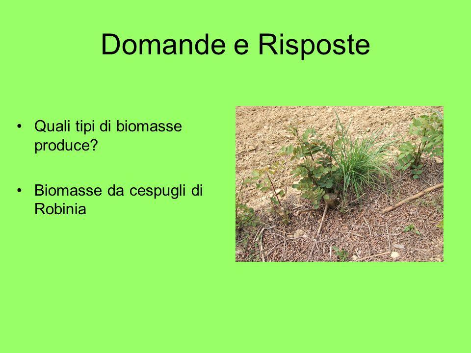 Domande e Risposte Quali tipi di biomasse produce Biomasse da cespugli di Robinia