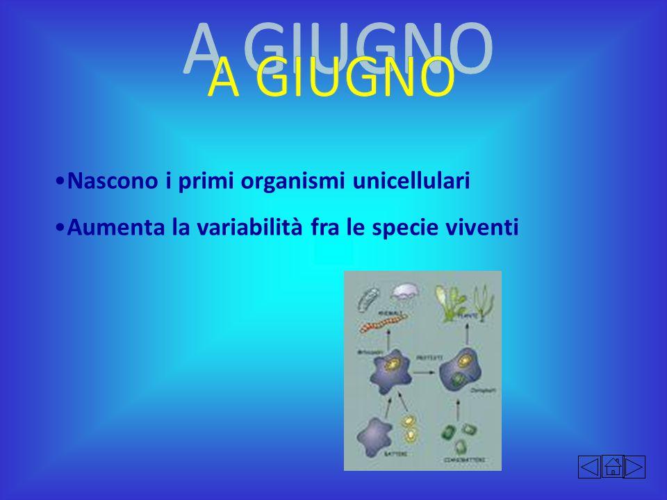Nascono i primi organismi unicellulari Aumenta la variabilità fra le specie viventi