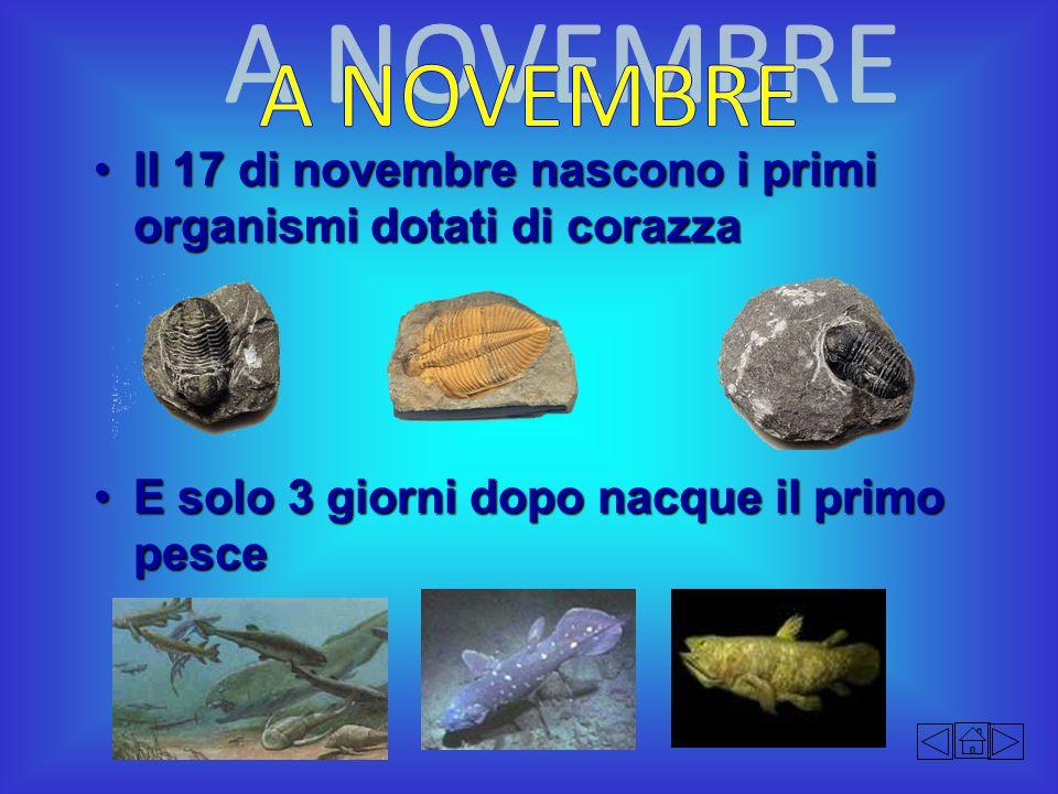 Il 17 di novembre nascono i primi organismi dotati di corazzaIl 17 di novembre nascono i primi organismi dotati di corazza E solo 3 giorni dopo nacque