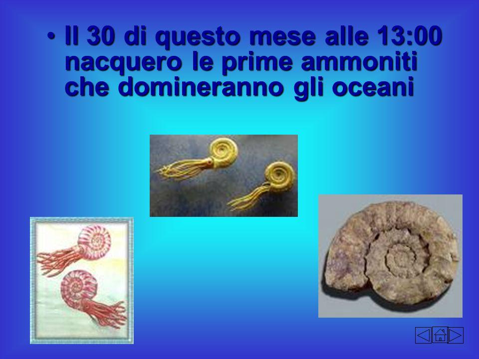 Il 30 di questo mese alle 13:00 nacquero le prime ammoniti che domineranno gli oceaniIl 30 di questo mese alle 13:00 nacquero le prime ammoniti che do