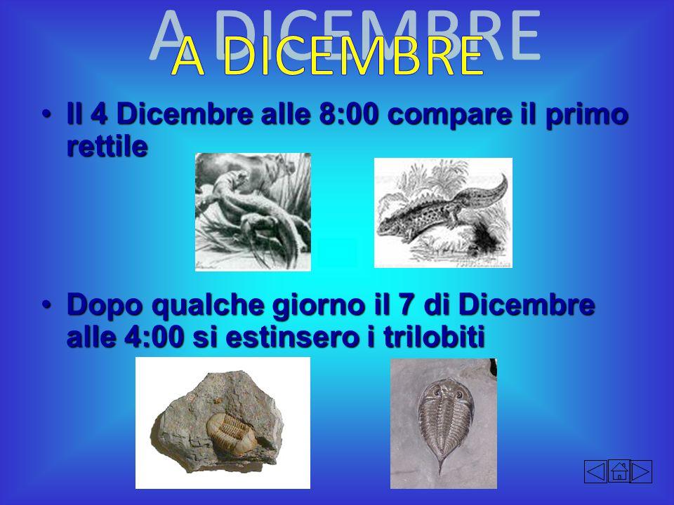 Il 4 Dicembre alle 8:00 compare il primo rettileIl 4 Dicembre alle 8:00 compare il primo rettile Dopo qualche giorno il 7 di Dicembre alle 4:00 si est