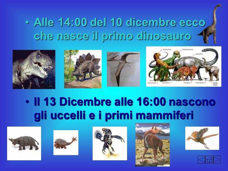 Alle 14:00 del 10 dicembre ecco che nasce il primo dinosauroAlle 14:00 del 10 dicembre ecco che nasce il primo dinosauro Il 13 Dicembre alle 16:00 nas