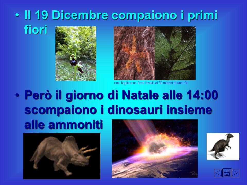 Il 19 Dicembre compaiono i primi fioriIl 19 Dicembre compaiono i primi fiori Però il giorno di Natale alle 14:00 scompaiono i dinosauri insieme alle a