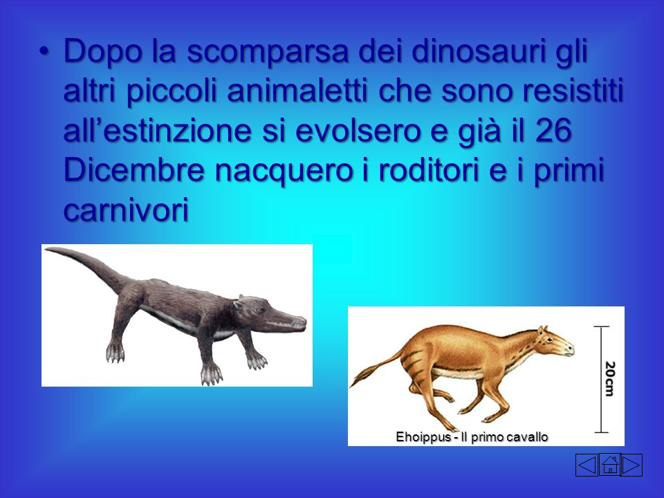 Dopo la scomparsa dei dinosauri gli altri piccoli animaletti che sono resistiti allestinzione si evolsero e già il 26 Dicembre nacquero i roditori e i