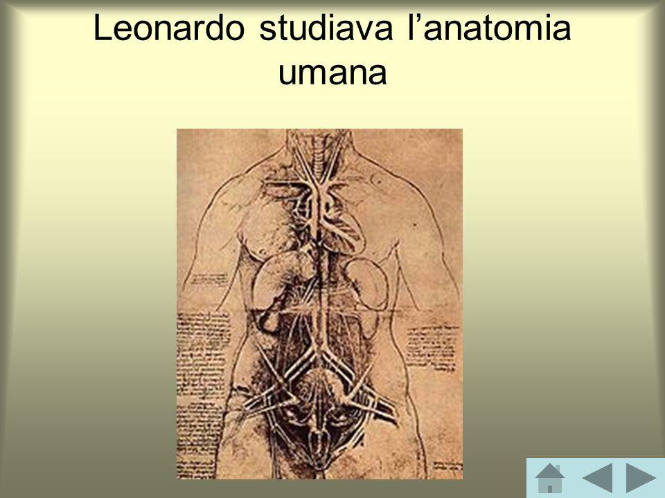 Leonardo studiava lanatomia umana