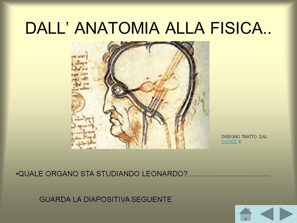 DALL ANATOMIA ALLA FISICA..