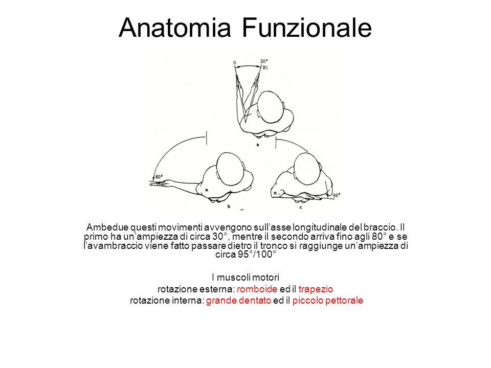 Anatomia Funzionale Ambedue questi movimenti avvengono sullasse longitudinale del braccio. Il primo ha unampiezza di circa 30°, mentre il secondo arri