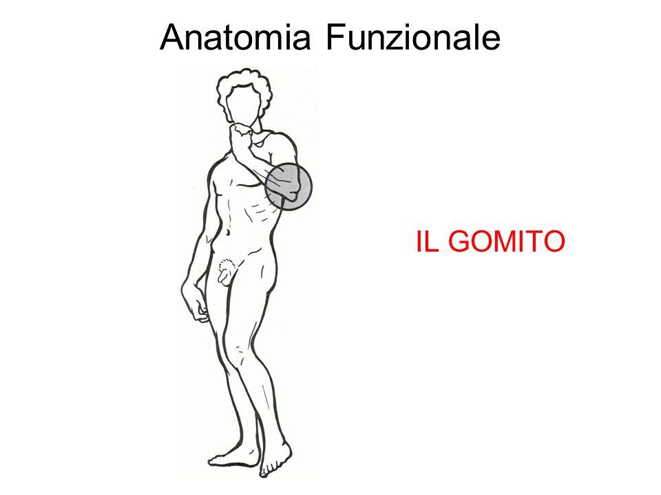 Anatomia Funzionale IL GOMITO