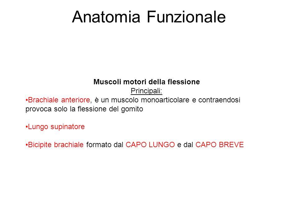 Anatomia Funzionale Muscoli motori della flessione Principali: Brachiale anteriore, è un muscolo monoarticolare e contraendosi provoca solo la flessio