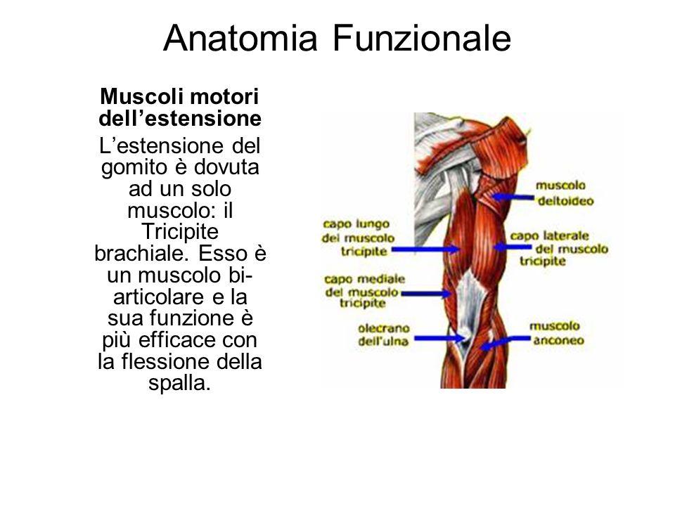 Anatomia Funzionale Muscoli motori dellestensione Lestensione del gomito è dovuta ad un solo muscolo: il Tricipite brachiale. Esso è un muscolo bi- ar