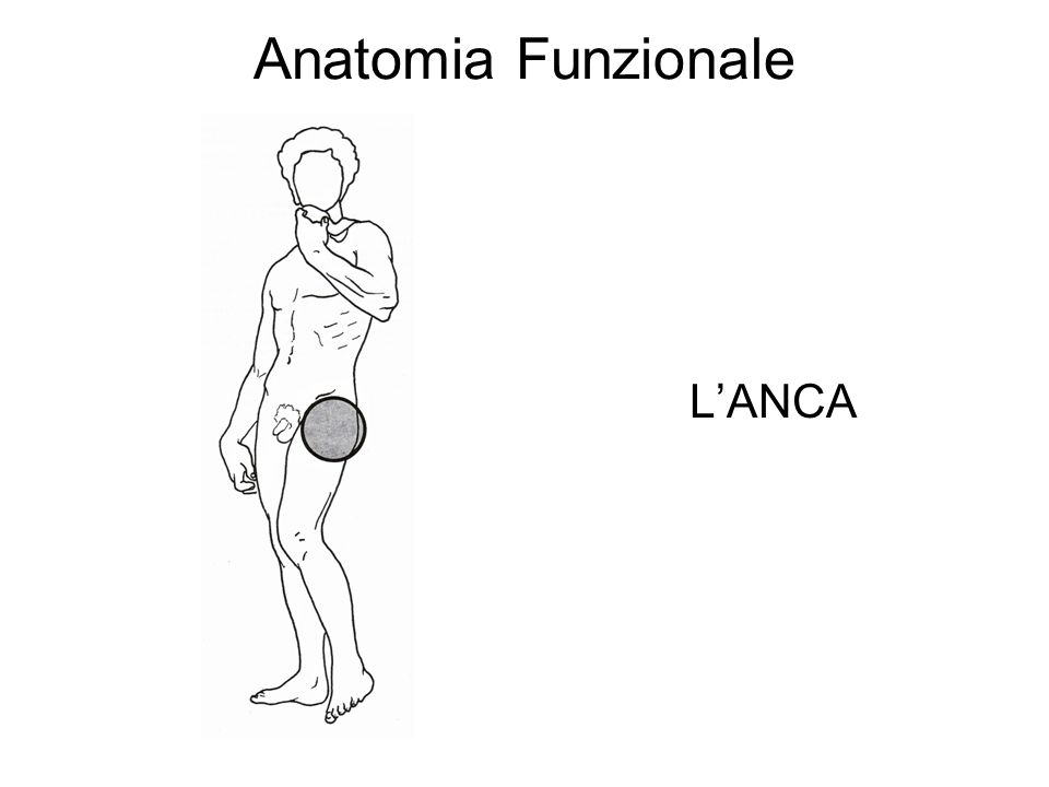 Anatomia Funzionale LANCA