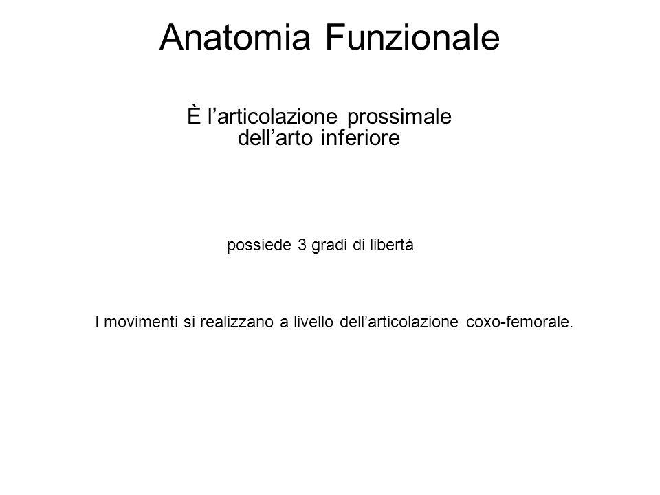 Anatomia Funzionale È larticolazione prossimale dellarto inferiore possiede 3 gradi di libertà I movimenti si realizzano a livello dellarticolazione coxo-femorale.