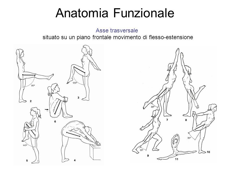 Anatomia Funzionale Asse trasversale situato su un piano frontale movimento di flesso-estensione