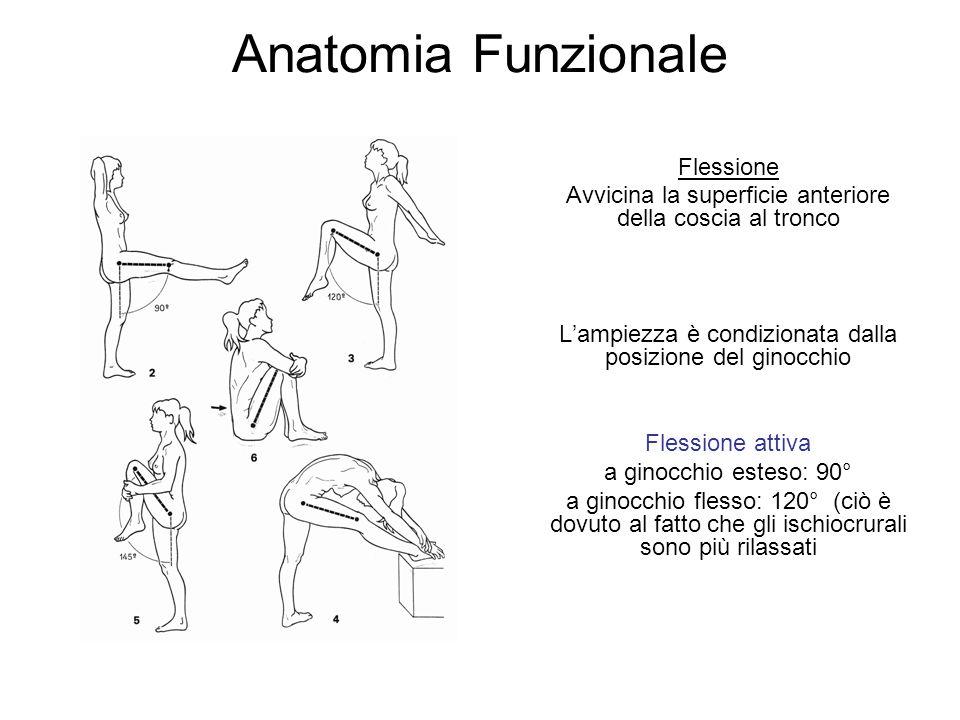 Anatomia Funzionale Flessione Avvicina la superficie anteriore della coscia al tronco Lampiezza è condizionata dalla posizione del ginocchio Flessione attiva a ginocchio esteso: 90° a ginocchio flesso: 120° (ciò è dovuto al fatto che gli ischiocrurali sono più rilassati