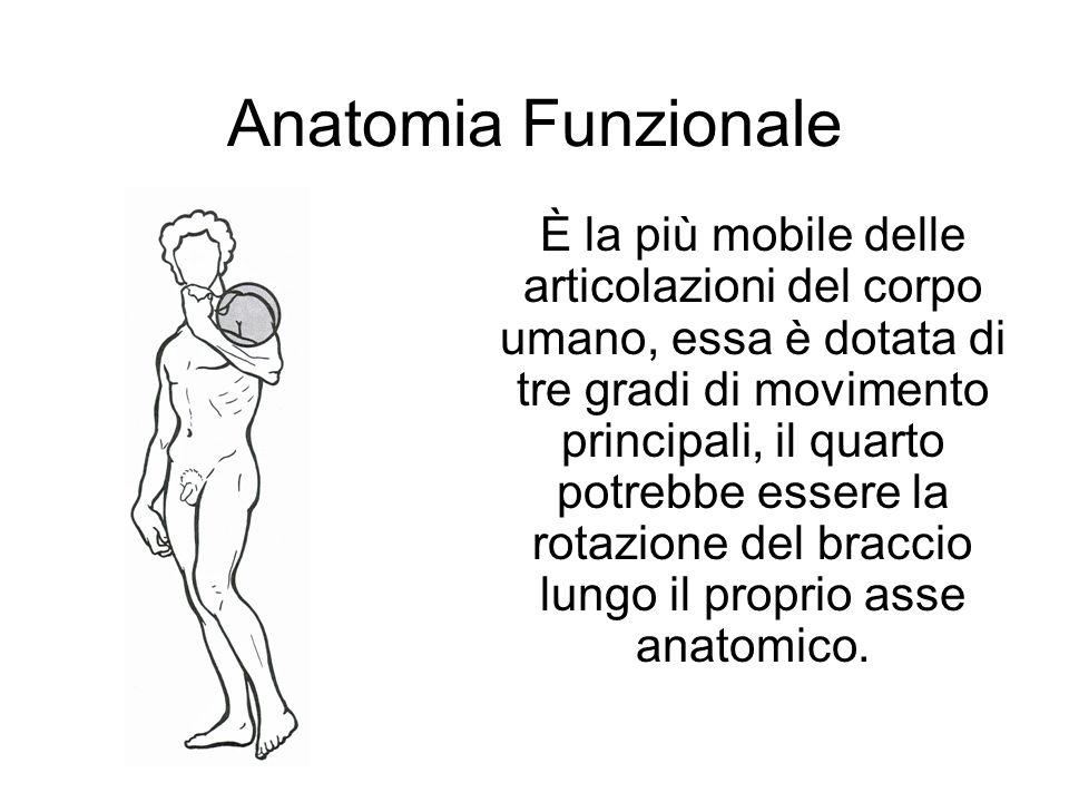 Anatomia Funzionale È la più mobile delle articolazioni del corpo umano, essa è dotata di tre gradi di movimento principali, il quarto potrebbe essere la rotazione del braccio lungo il proprio asse anatomico.