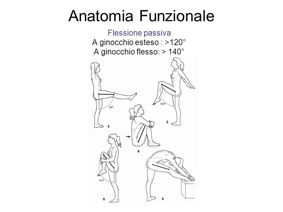 Anatomia Funzionale Flessione passiva A ginocchio esteso : >120° A ginocchio flesso: > 140°