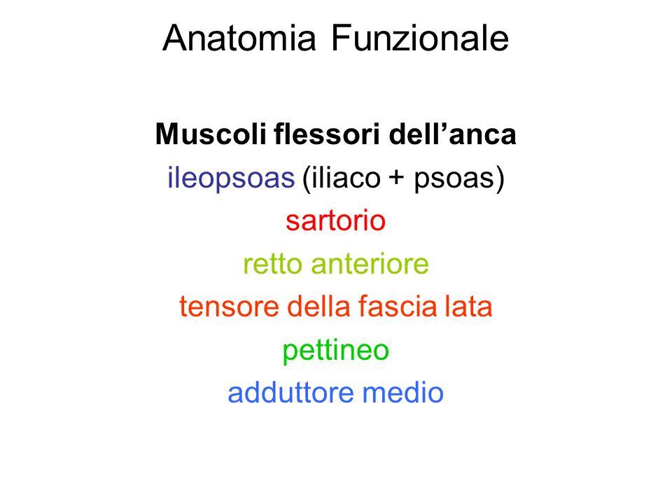 Anatomia Funzionale Muscoli flessori dellanca ileopsoas (iliaco + psoas) sartorio retto anteriore tensore della fascia lata pettineo adduttore medio