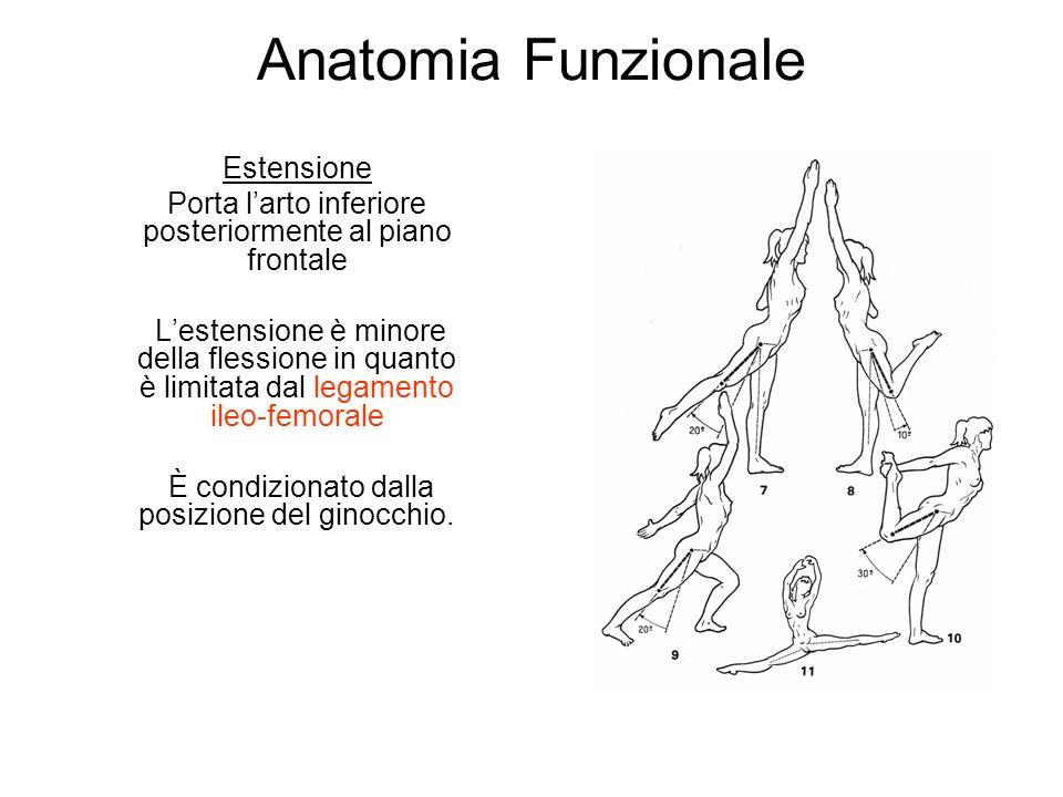 Anatomia Funzionale Estensione Porta larto inferiore posteriormente al piano frontale Lestensione è minore della flessione in quanto è limitata dal legamento ileo-femorale È condizionato dalla posizione del ginocchio.