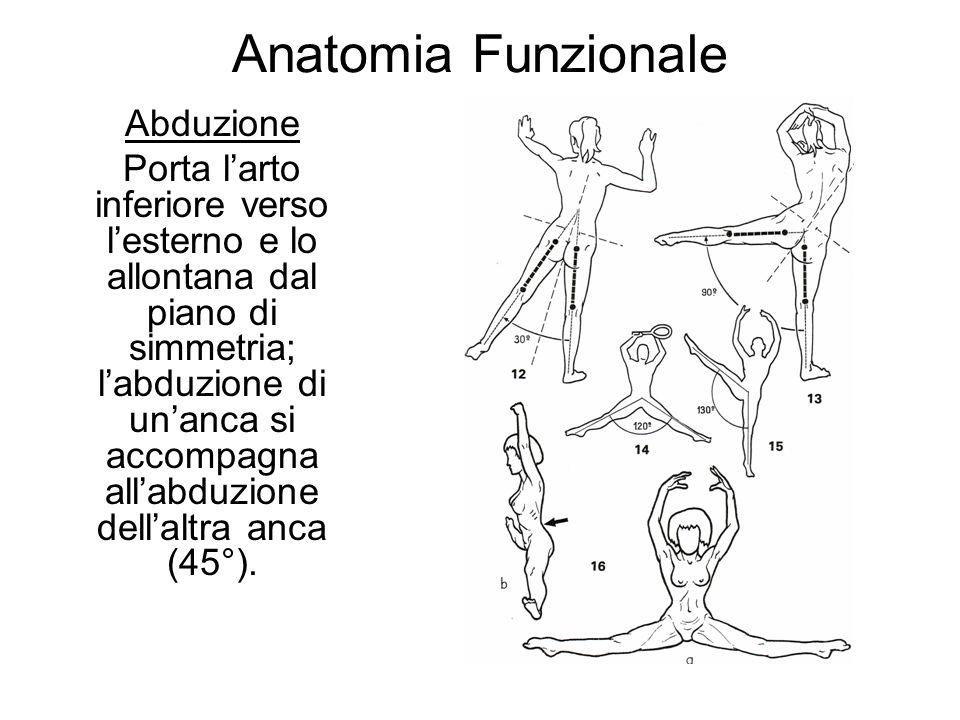 Anatomia Funzionale Abduzione Porta larto inferiore verso lesterno e lo allontana dal piano di simmetria; labduzione di unanca si accompagna allabduzione dellaltra anca (45°).