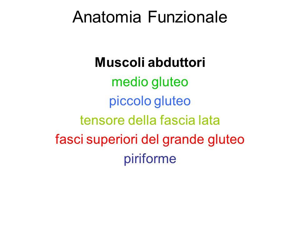 Anatomia Funzionale Muscoli abduttori medio gluteo piccolo gluteo tensore della fascia lata fasci superiori del grande gluteo piriforme