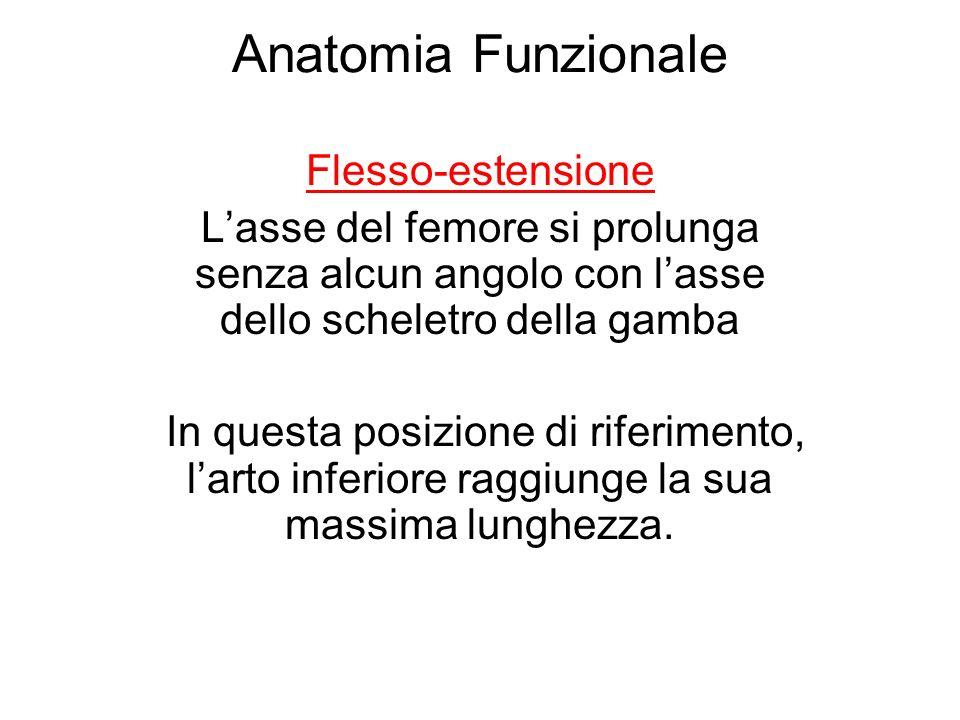 Anatomia Funzionale Flesso-estensione Lasse del femore si prolunga senza alcun angolo con lasse dello scheletro della gamba In questa posizione di riferimento, larto inferiore raggiunge la sua massima lunghezza.
