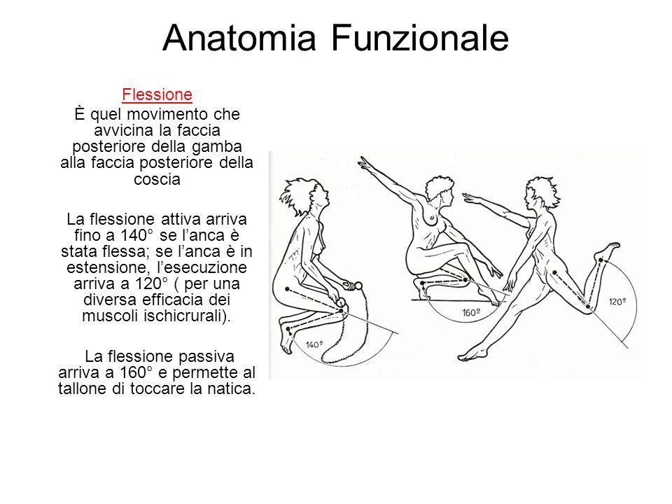 Anatomia Funzionale Flessione È quel movimento che avvicina la faccia posteriore della gamba alla faccia posteriore della coscia La flessione attiva arriva fino a 140° se lanca è stata flessa; se lanca è in estensione, lesecuzione arriva a 120° ( per una diversa efficacia dei muscoli ischicrurali).