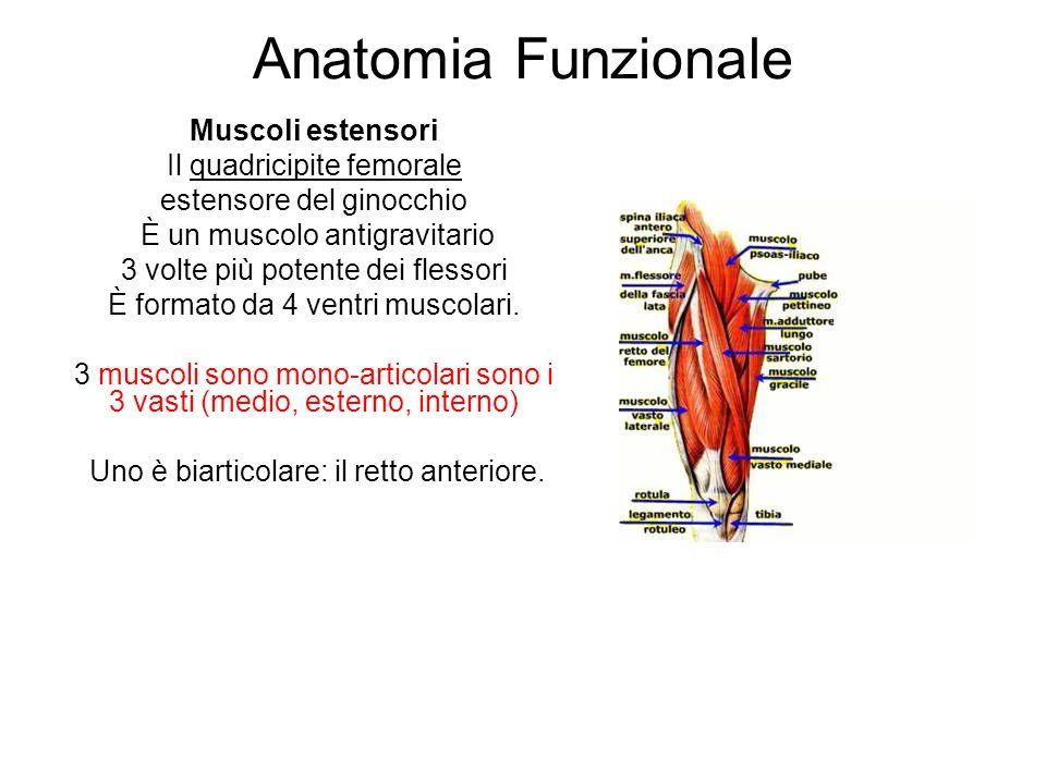 Anatomia Funzionale Muscoli estensori Il quadricipite femorale estensore del ginocchio È un muscolo antigravitario 3 volte più potente dei flessori È formato da 4 ventri muscolari.