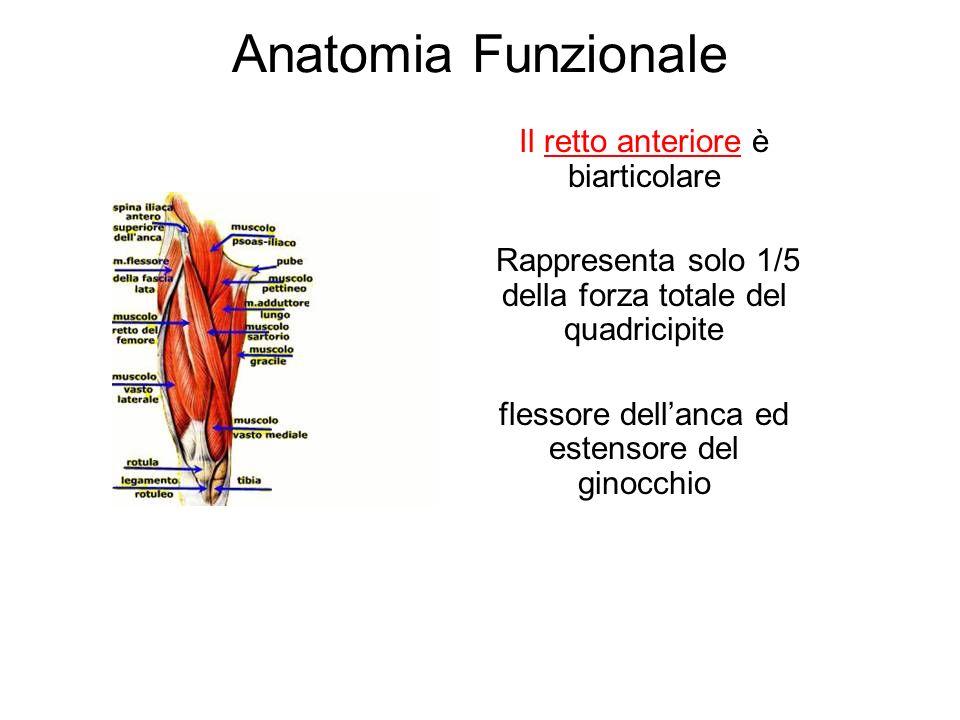 Anatomia Funzionale Il retto anteriore è biarticolare Rappresenta solo 1/5 della forza totale del quadricipite flessore dellanca ed estensore del ginocchio