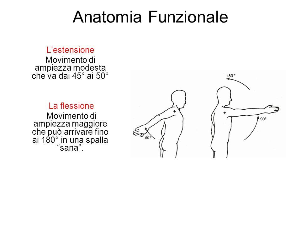 Anatomia Funzionale Lestensione Movimento di ampiezza modesta che va dai 45° ai 50° La flessione Movimento di ampiezza maggiore che può arrivare fino ai 180° in una spalla sana.