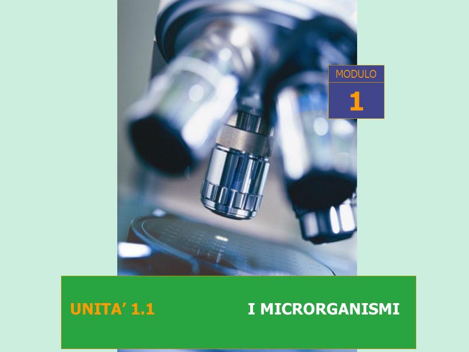 I microrganismi S ONO ORGANISMI VISIBILI AL MICROSCOPIO PRINCIPALI MICRORGANISMI RILEVANTI IN CAMPO ALIMENTARE: VIRUS BATTERI MUFFE E LIEVITI (REGNO DEI FUNGHI)