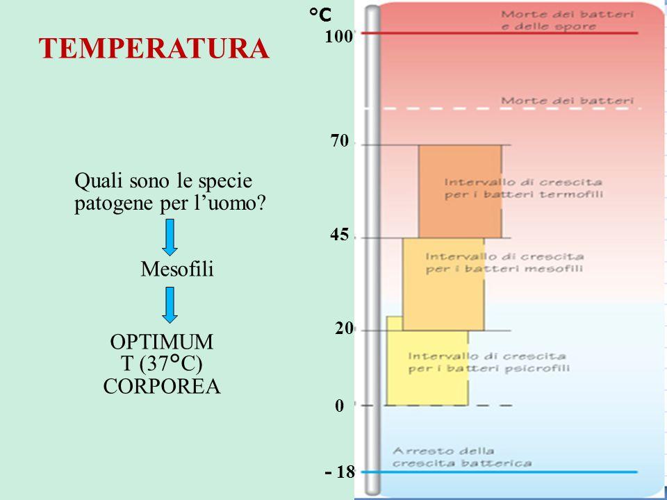 °C Quali sono le specie patogene per luomo? Mesofili OPTIMUM T (37°C) CORPOREA 100 70 45 20 0 - 18 TEMPERATURA