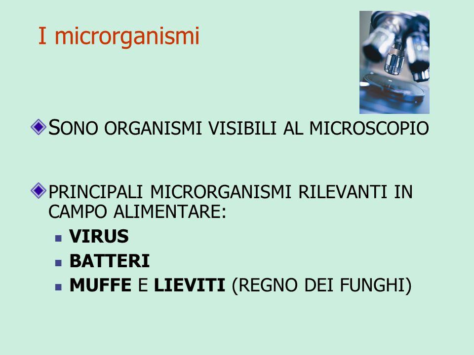 Classificazione dei microrganismi PATOGENI: RESPONSABILI DI MALATTIE DELLUOMO, DEGLI ANIMALI DOMESTICI, DELLE PIANTE (VIRUS INFLUENZA, BATTERIO TUBERCOLOSI, DEL COLERA ECC.)