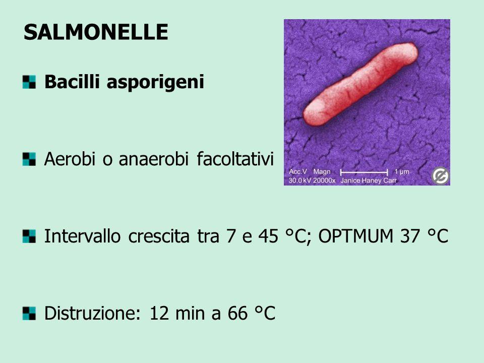 SALMONELLE Bacilli asporigeni Aerobi o anaerobi facoltativi Intervallo crescita tra 7 e 45 °C; OPTMUM 37 °C Distruzione: 12 min a 66 °C